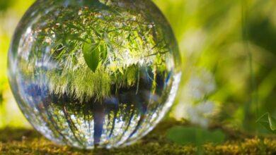 Photo of Día Mundial del Ambiente 2021:  lo más importante es lo que NO se ve