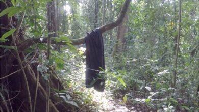 Photo of «¿Dónde estás mamá?»: Un rescate en la selva del Darién que invita a reflexionar