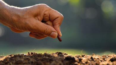 Photo of «El reino de los cielos se parece a un hombre que sembró buena semilla…»