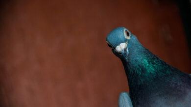 Photo of «Sean sencillos como palomas»